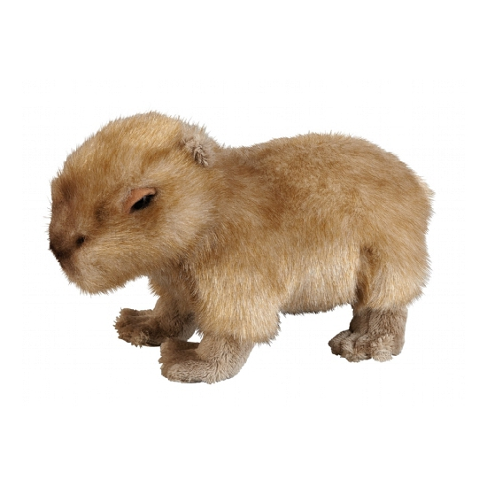 Pluche capibara knuffel 25 cm