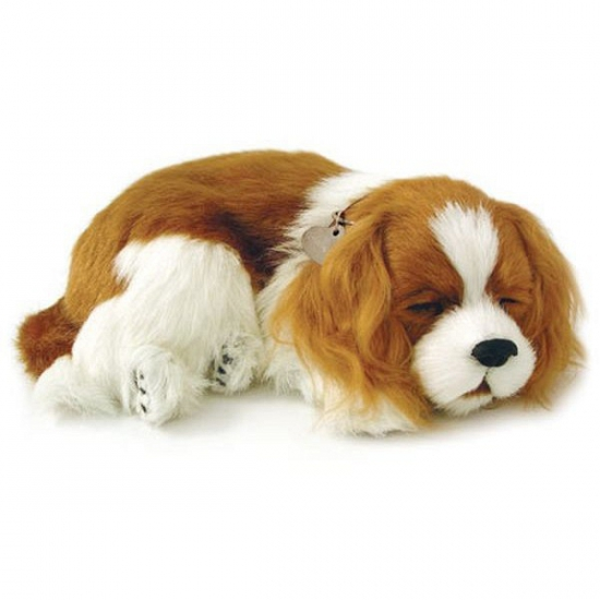 Slapende Cavalier King Charles puppy