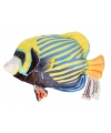 Blauw met gele tropische vis knuffel 21 cm