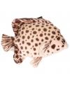 Pluche gevlekte tropische vis knuffel 21 cm
