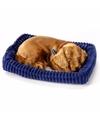 Pluche slapende dachshund teckel
