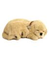 Pluche slapende golden retriever