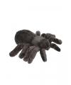 Pluche tarantula spin knuffel 16 cm